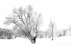 Winter (roelivtil) Tags: blackwhite boom france frankrijk landscape landschap monochrome tree winter 7dwf bw