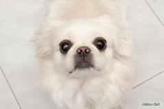 _DSC5385 (Adriano Clari) Tags: alice cane dog pet friend adriano clari animale domestico