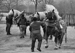 Horsepower (Only Snatches) Tags: bavaria bayern berching deutschland germany horse jahreszeit mood natur neumarkt oberpfalz pferd rossmarketberching rossmarktberching tiere upperpalatinate winter animals bw cold kalt nature season sw