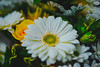I love flowers ... (Julie Greg) Tags: flower nature colour details macro plant