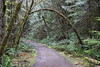 Entrance to the forest (rozoneill) Tags: north umpqua trail river swiftwater park bobs creek butte deadline falls oregon hiking national recreation forest idleyld roseburg glide