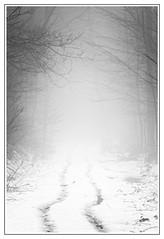The Fog ... (malp007) Tags: foggy nebel fog mist waldweg trail wald woods forest skov blackwhite monochrome stillife stillleben nature naturephotography bw outoffocus winter snow