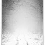 The Fog ... thumbnail