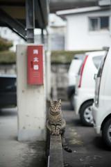 猫 (fumi*23) Tags: ilce7rm3 sony 85mm fe85mmf18 sel85f18 neko cat animal bokeh depthoffield dof gato katze emount miyazaki a7r3 ねこ 猫 ソニー 宮崎