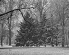 TowerGrovePark_SAF6812 (sara97) Tags: copyright©2018saraannefinke missouri nature photobysaraannefinke saintlouis snow towergerovepark towergrovepark2018 weather winter winter201718 winterweather monochrome bw blackandwhite blackwhite