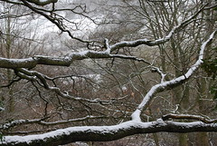 Snow on top .... (Halliwell_Michael ## Offline mostlyl ##) Tags: brighouse hoveedge westyorkshire nikond40x snow 2018 winter trees redbeckvalley landscapes branches treesdiestandingup