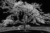 Tree of Art- Art.7-.jpg (alpmountisolabella) Tags: isoleborromee lakemaggiore art ossola giardinobotanico verbania italy italia bella baveno palazzo mottarone foto picture borromäischeninseln isolabella photography piemonte stresa isolapescatori beautiful scene lagomaggiore ticino