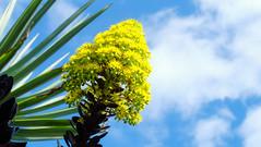 Plant Life Down Under (MrTheEdge7) Tags: adelaide australia southaustralia adelaidebotanicgarden botanical botanicalgarden plant plants leaf leaves green flower flowers