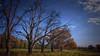 Old oaks (lucjanglo) Tags: silesia poland europe sigma