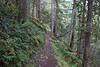 Whew, would this uphill ever stop? (rozoneill) Tags: north umpqua trail national forest recreation panther mott segment oregon hiking roseburg
