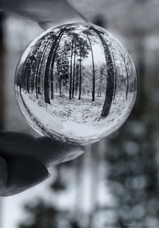 snow globe trees