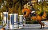 Golden Equus (José M. F. Almeida) Tags: centrohipicodocampogrande hípica hipismo horses jump contest equus ferus caballus