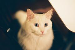 CNV000031 (雅布 重) Tags: f100 nikkor 50mm f14d tudorcolors xlx200 film snap japan tokyo 2018 cat