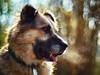 12/52 – here be dragons (stephubik) Tags: candork 52weeksfordogs cold portrait dog