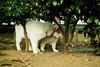 neko-neko2037 (kuro-gin) Tags: cat cats animal japan snap street straycat 猫 sigma dp2
