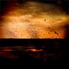 """From my album """"Dreams"""" (Francisco (PortoPortugal)) Tags: 0522018 20171231fpbo7373 sonhos dreams quadrada square aves birds portografiaassociaçãofotográficadoporto franciscooliveira"""