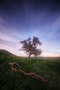 The Early Morning (Alex Savenok) Tags: ruhama morning lights dreams dreamscape trees fields greenfields israel israelnature stars sunrise clouds landscape