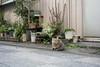 猫 (23fumi@fuyunofumi) Tags: ilce7rm3 sony 55mm sel55f18z cat neko gato sonnartfe55mmf18za katze animal alley street miyazaki zeiss ねこ 猫 ソニー 宮崎 路地