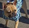 Dog Apparel (Scott 97006) Tags: dog cute shirt clothes animan canine pet cutie