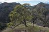 Lake Berryessa Hills (atgc_01) Tags: pentaxk5iis zenitar16mm lakeberryessa hills california spring