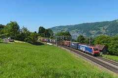 474 015 SBB Cargo   Arth (Andrea Frigerio - gigi260890) Tags: e474 474015 re474 474sbb sbb sbbcargo sbbcffffs sbbcargointernational siemens es64f4 treno train trenomerci zug güterzug freighttrain ferrovia railway railroad rail bahn eisenbahn svizzera switzerland suisse schweiz arth zugersee lagodizugo nikon lake d7000 1680 kanton schwyz svitto baureihe