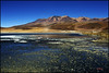 Laguna hedionda, Cordillera Lípez, Bolivia (bit ramone) Tags: flamenco flamingo laguna azul lagoon lípez bolivia altiplano bitramone airelibre paisaje cielo hierba montaña agua arena