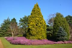 A walk through the heather gardens! (suekelly52) Tags: green heather