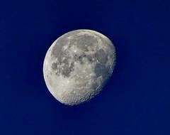 Early Monday morning Waning Gibbous Moon set (peggyhr) Tags: peggyhr moon dsc07179a hawaii moonset morning thegalaxy waninggibbousmoon carolinasfarmfriends thegalaxystars level1pfr thegalaxylevel2 halloffamegallery