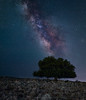 Eternity tree (sergioskulukas) Tags: nightscape starscape milkyway summer sigmaart longexposure rhodes greece darksky tree rocks stars night sky