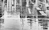 Piazza ripples (Francis Mansell) Tags: water ripple reflection piazzasanmarco sanmarco venezia venice gull bird animal yellowleggedgull larusmichahellis pattern acquaalta blackwhite highwater