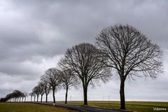 08032018-DSC_0006 (vidjanma) Tags: arbres file chemin nuages
