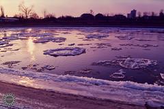 Violet floe (lophophora_art) Tags: poznań poznan warta poland water river winter snow spring is coming sun floe