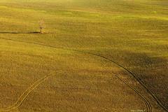Alone (Darea62) Tags: alone solitary minimal tree nature valdorcia tuscany toscana fields countryside landscape panorama paesaggio grass