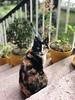 Belinda! (coralpin) Tags: iphonex colour spain sotodelbarco riberas asturias animales animal gato cat