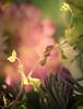 My ray of light (Bai R.) Tags: gardenadventures snail minisnail ray light sun green pink yellow springtime fairy fairytale fairies faeries nikkor105mmf28gvrmicro