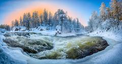 Myllykoski rapids (M.T.L Photography) Tags: myllykoski water trees rapids ice snow winter sky sunrise mtlphotography mikkoleinonencom juuma kuusamo riverkitkajoki panoramicphotography