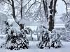 Snow White captured by BiBiDoan (B I B I D O A N - New York) Tags: snow snowphotos snowwhite cold winterphotos photobybibidoan photographylovers winterstorm winterphotography snowphotography fineartphotos artistic artsyphoto