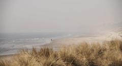 Foggy afternoon (JLM62380) Tags: foggy fog brouillard afternoon hardelot france sea beach horse oyat