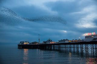 Murmur over the pier