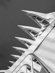 Saw teeth (Teelicht) Tags: ciudaddelasartesylasciencias ciutatdelesartsilesciències comunidadvalenciana museodelascienciaspríncipefelipe museudelesciènciespríncepfelip spain spanien stadtderkünsteundderwissenschaften valencia architektur architecture santiagocalatravavalls cityofartsandsciences