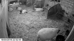 CamGrab [18_03_2018 22_52_00.jpg] (LambWatch!) Tags: camgrab