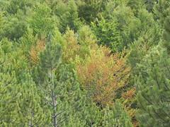 DSCN9730 (Gianluigi Roda / Photographer) Tags: apennines summer latesummer mountains woods trees rocks landscapes crocedeicolli appenninobolognese