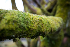 Shades of Green (cookedphotos) Tags: canon 5dmarkiv travel scotland unitedkingdom nature tree moss bloom regrow gb