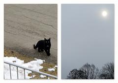 sie will rein, es ist so ungemütlich... (ekeha) Tags: nachbarskatze katze sonne schnee