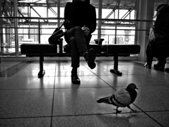 A Urban Dove (明遊快) Tags: dove city urban station scape building bw blackandwhite window man reflection lines