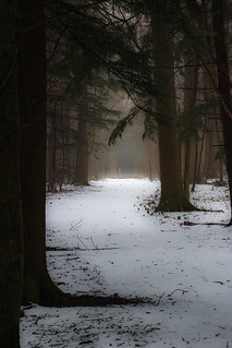 atmospheric trees in the snow...