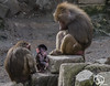 wildlands-emmen-33 (voorhammr) Tags: 2018 juul robin apen emmen giraffen ijsberen neushoorn nijlpaard pinquins prairiehonden vlinders wildlands zeeleeuwen zoo drenthe nederland nl