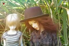 Roux & Rei 🌱 (tarengil) Tags: bjd abjd balljointeddoll dollmore zaolluv zaoll elfdoll vivien supia original body legit asian doll couple