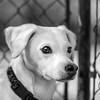 Remedy10Mar201857-Edit.jpg (fredstrobel) Tags: dogs pawsatanta phototype atlanta blackandwhite usa animals ga pets places pawsdogs decatur georgia unitedstates us