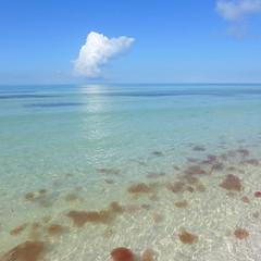 Boca Grande Key West Florida (Big Red Angel) Tags: boca grande key west florida back country